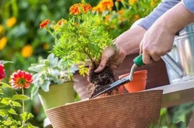 安宁园林绿化肥